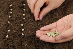 Jardinage en mars : travaux au potager et au verger