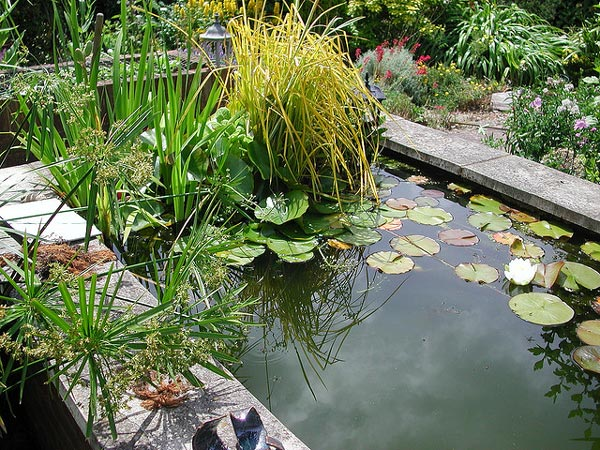 Installer un bassin dans son jardin for Plante bassin poisson