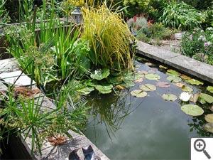 Installer un bassin dans son jardin