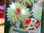 Dahlia : le premier Label rouge