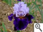 Iris Magnétisme