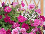 Composer une jardinière spectaculaire et durable