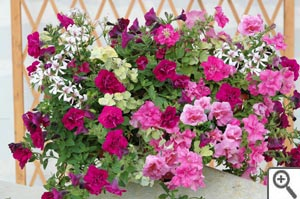 Composer une jardinière spectaculaire et durable avec de jeunes plants