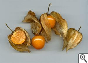 Fruits de physalis du Pérou