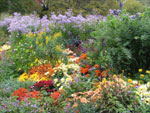 Un massif d'automne opulent