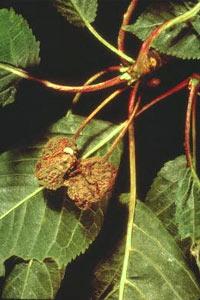Verger : traitements préventifs de printemps pour les arbres fruitiers