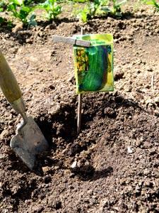 Où semer les légumes ? En place, en pépinière, en godets...