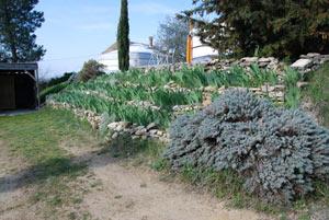 Talus avec murets de pierre sèche et iris