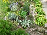 Végétaliser un talus