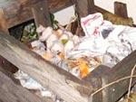Compost : les bases du compostage