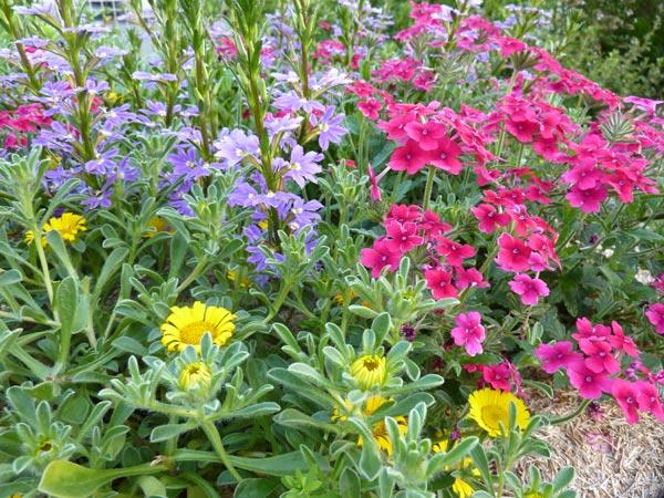 Fleurs retombantes pour vasques for Vasques pour fleurs jardin