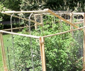 quels tuteurs pour vos tomates dans mon jardin jardinage de mon jardin. Black Bedroom Furniture Sets. Home Design Ideas