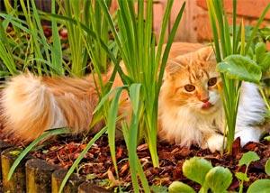 Eloigner les chats du jardin potager