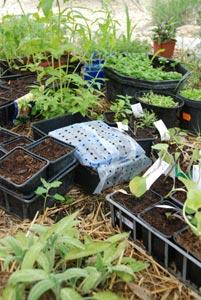 Protection des semis au potager contre les chats