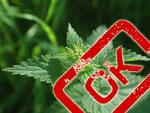 Autorisation de vente du purin d'ortie : une victoire pour les PNPP