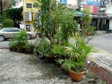Plantes vertes en extérieur - (c) Marc Phu