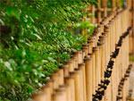 Simples décors de bambou