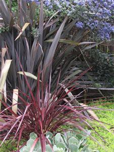Phormium et plantes associées