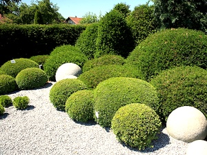 Comment utiliser le buis pour structurer le jardin