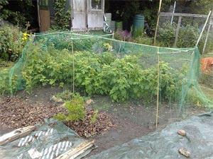 Protégez les récoltes du verger