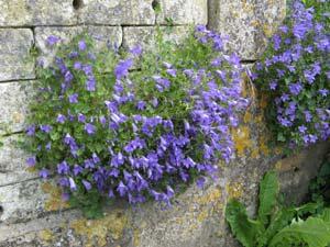 Des plantes sur les murs