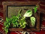 Un mur végétal qui tient dans un cadre