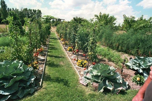 Passez au potager paysager - Comment faire son jardin paysager ...