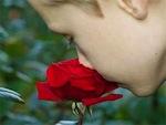 Un jardin parfumé en été 1/2