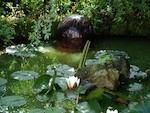 Entretenir un bassin de jardin