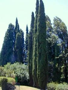plantation arbre cypr s perspective tout. Black Bedroom Furniture Sets. Home Design Ideas