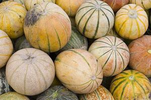 Diverses variétés de melon