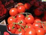 Le goût des tomates