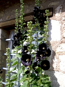Savoir employer le noir au jardin