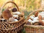 Champignons : cueillette sans risque