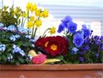 Une jardinière hivernale aux couleurs éclatantes