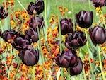 Utiliser le noir au jardin