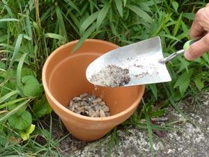 Ajout de la terre et du sable dans le pot