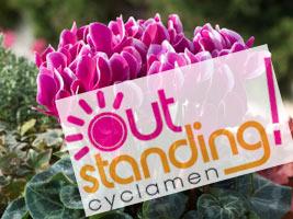 Logo Outstanding cyclamen sur Cyclamen Fantasia Morel