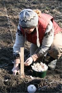 Jardinage en novembre : potager et au verger