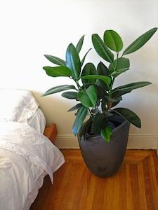 Une plante pour chaque pi ce for Quelle plante dans une salle de bain