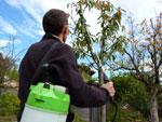 Fruitiers : traitez à la chute des feuilles