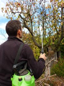 Traitement d'un arbre fruitier à l'automne