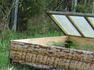 Pépinière au jardin protégée par un châssis