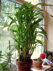 Plantes devant une fenêtre