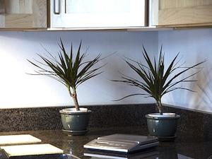 Une plante pour chaque pi ce for Plante pour cuisine