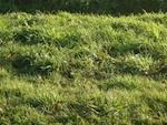 Gazon : regarnir une pelouse
