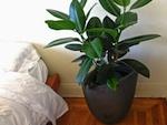 Une plante pour chaque pièce
