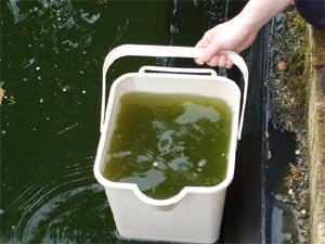 Quand nettoyer un bassin de jardin bassin de jardin for Filtre bassin poissons rouges