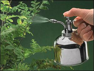 vaporiser les plantes vertes