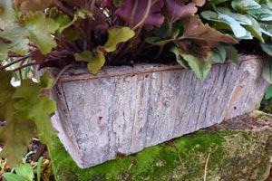 jardini re chic pour l 39 automne avec les mini cyclamens. Black Bedroom Furniture Sets. Home Design Ideas